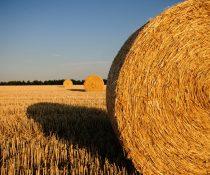 tarımgörsel2